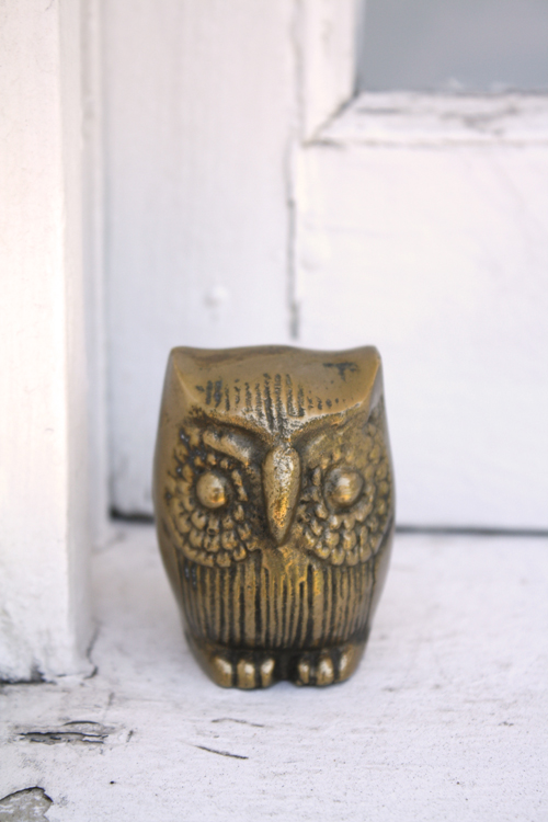 Owl on windowsill