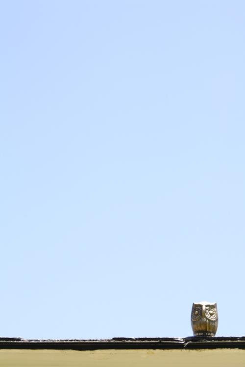 Owl with blue sky
